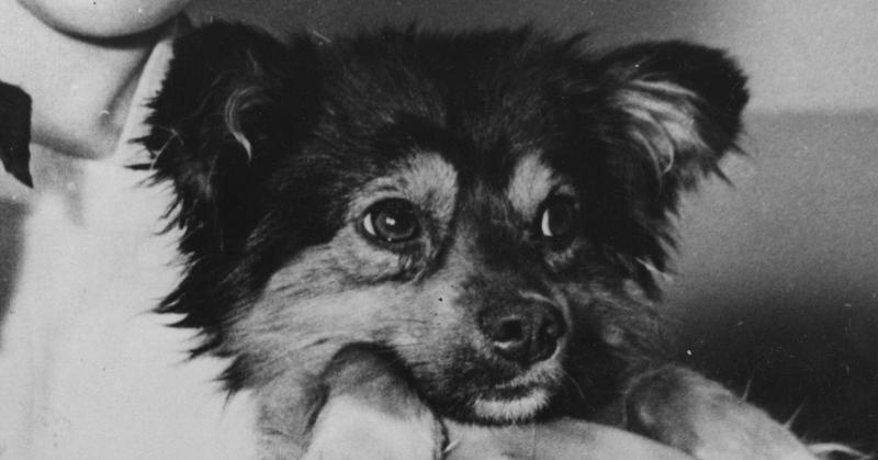 Astro Benji Checkers Famous Dogs Of The 50s 60s 70s